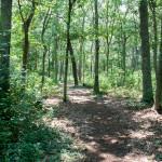 Wertheim Park
